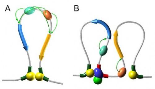 Лактозный оперона на примере кишечной палочки